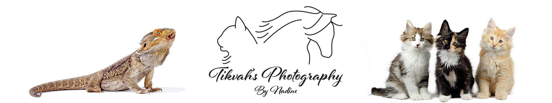 Tikvah's Photography